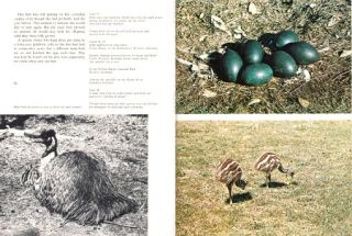 The life of the Emu.