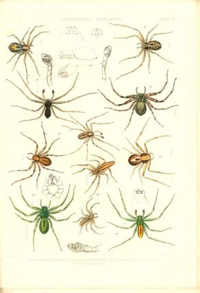 A history of the spiders of Great Britain and Ireland.
