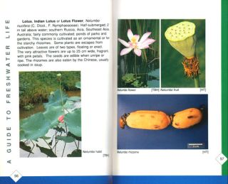 A guide to freshwater life in Singapore.