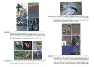 Coastal wetlands of the world: geology, ecology, distribution and applications.
