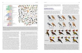 HBW and BirdLife International illustrated checklist of the birds of the world, volume one: non-passerines.