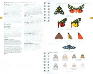 Concise Guide to the Moths of Great Britain and Ireland.