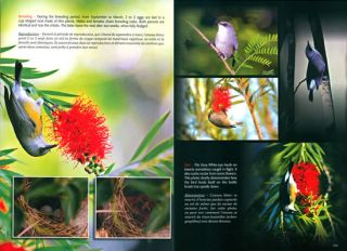Birds of the Mascarene: a comprehensive collection of endemic, oceanic, migratory and exotic birds of Mauritius, Rodrigues and Reunion.