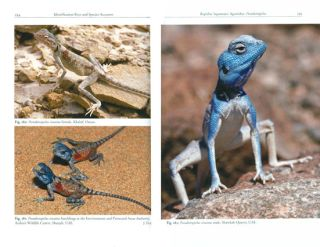 The amphibians and reptiles of Oman and the UAE.