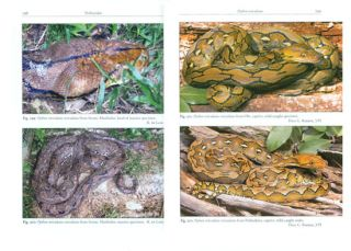The snakes of the Moluccas (Maluku), Indonesia: a field guide to the land and non-marine aquatic snakes of the Moluccas with identification key.
