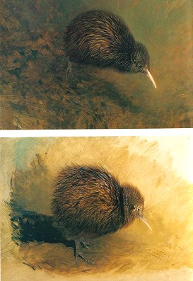 Kiwis: a monograph of the family Apterygidae.
