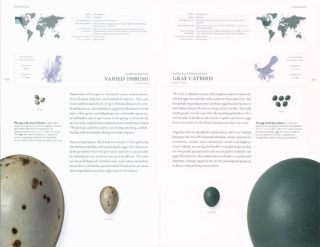 The book of eggs: a life-size guide to the eggs of six hundred of the world's bird species.