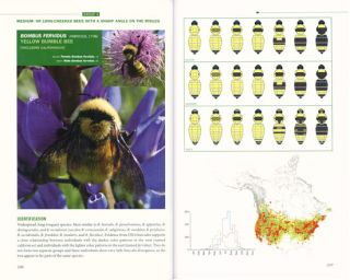 Bumblebees of North America: an identification guide.