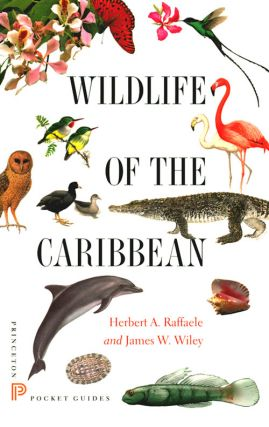 Wildlife of the Caribbean. Herbert A. Raffaele, James W. Wiley