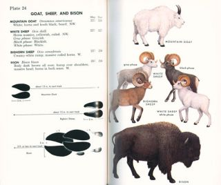A field guide to the mammals: field marks of all North American species found north of Mexico.
