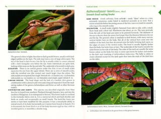 A field guide to the snakes of Borneo.