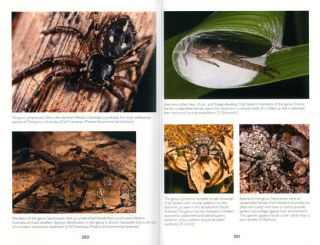 A guide to the spiders of Australia.