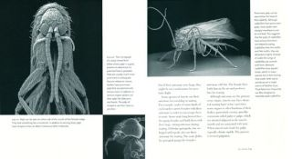 Art and architecture of insects.