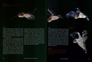 Bats: a world of science and mystery.