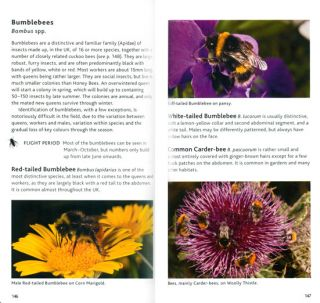 Bloomsbury pocket guide to insects.