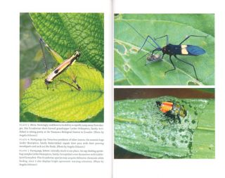 Planet of the bugs: evolution and the rise of insects.