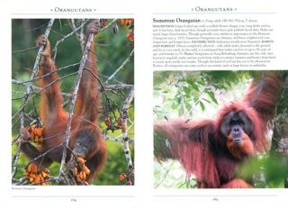 A naturalist's guide to the primates of Southeast Asia.