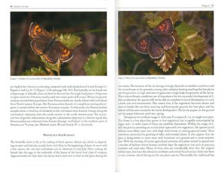 Jewels in the mist: a synopsis on the highly endangered butterfly species the Violet copper, Lycaena helle.