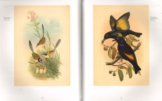 The business of nature: John Gould and Australia.