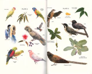 Birds of Palmerston in Australia's Top End.