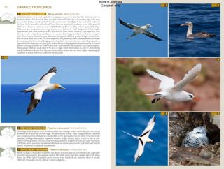 Birds of Australia: a photographic guide.