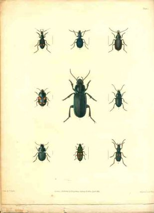 Annulosa Javanica, or an attempt to illustrated the natural affinities of the insects collected in Java by Thomas Horsfield and deposited by him in the museum of the Honourable East-India Company [number one, all published].