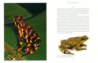 In search of lost frogs: the quest to find the world's rarest amphibians.