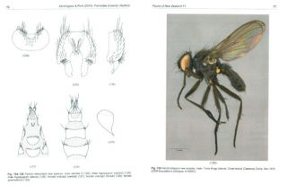 Fauna of New Zealand Number 71: Fannidae (Insecta: Diptera)