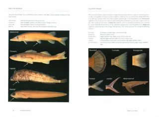 Fishes: a guide to their diversity.