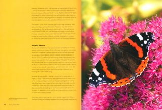 Seeing butterflies: new perspectives on colour, patterns and mimicry.