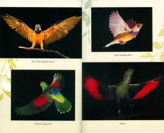 Birds of Pandemonium: life among the exotic and the endangered.
