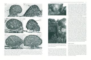 Biology and conservation of North American tortoises.