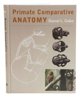 Primate comparative anatomy