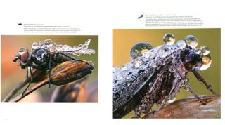 Bugs up close: a magnified look at the incredible world of insects.