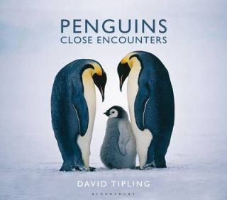 Penguins: close encounters. David Tipling.