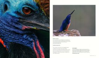 Wild Australasia: celebrating ten years of the ANZANG Photo Competition.