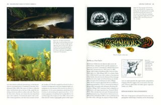 Freshwater fishes of North America, volume one: Petromyzontidae to Catostomidae.