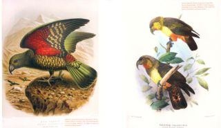 The library at the end of the world: natural science and its illustrators.