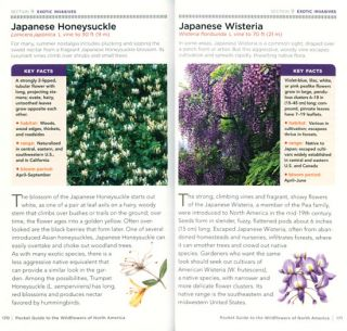 National Geographic pocket guide to wildflowers of North America.