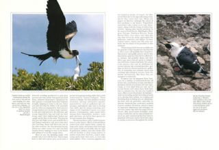 Seabirds of eastern North Pacific and Arctic waters.