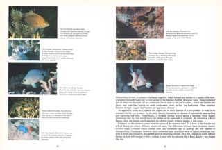 Reef fish: behavior and ecology on the reef and in the aquarium.
