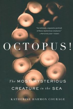 Octopus: the most mysterious creature in the sea