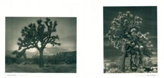 Ancient trees: portraits of time.