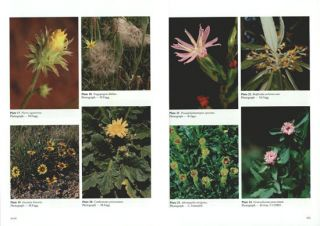 Flora of Australia, volume 37: Asteraceae [part one, all published].