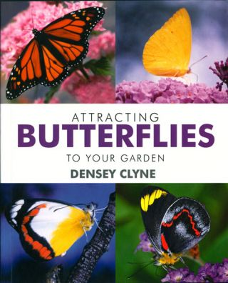 Attracting butterflies to your garden. Densey Clyne