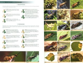 British moths: a photographic guide to the moths of Britain and Ireland.