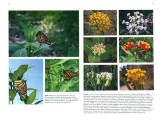 Monarchs in a changing world: biology and conservation of an iconic butterfly.