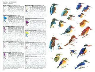 A field guide to the birds of Thailand.