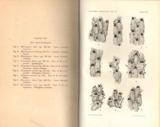 Catalogue of the fossil Bryozoa in the Department of Geology, volume four: the cretaceous Bryozoa (Polyzoa). The Cribrimorphs- part one.
