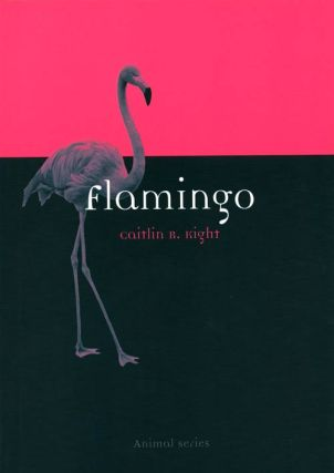 Flamingo. Caitlin R. Kight
